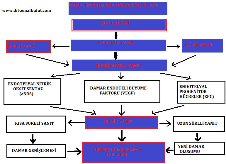 ESWT nin etki mekanizmalarının şematik gösterimi